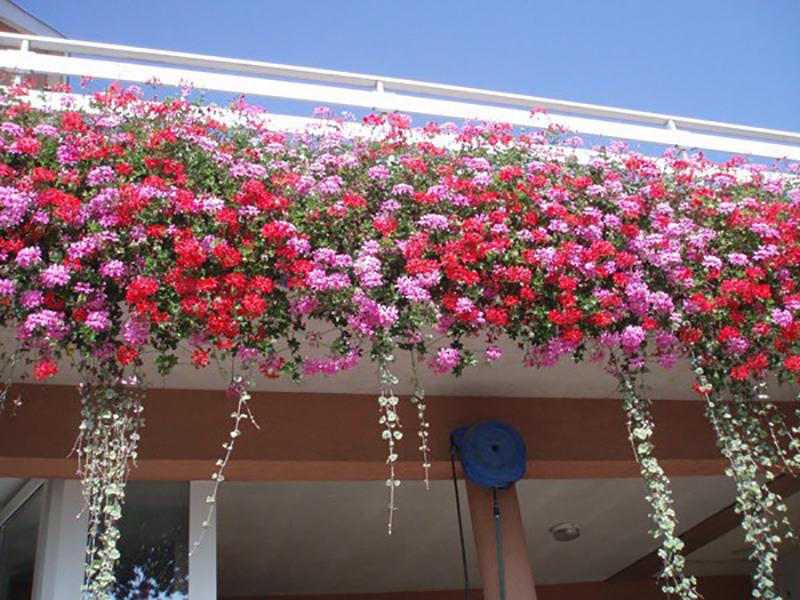 Nos astuces pour un balcon fleuri en ville